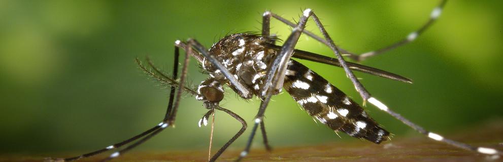 Protégez-vous des moustiques